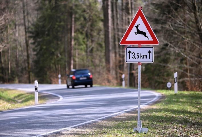 Wildunfall vermeiden: Wo Reh und Wildschwein häufig die Straße queren